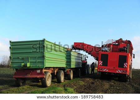 Tractor harvester during harvesting of beets