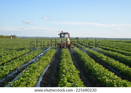Tractor in a field of strawberries - stock photo