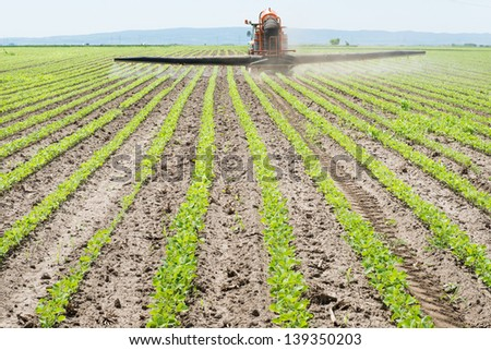 Tractor spraying soy in the spring