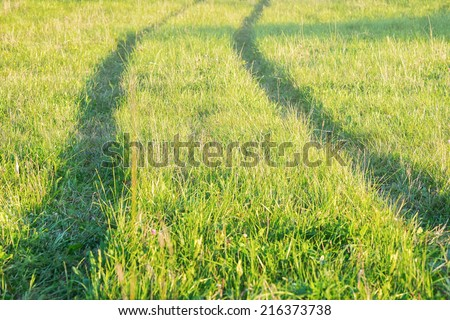 Tractor tracks in the green grass during sunset, Sweden - stock photo