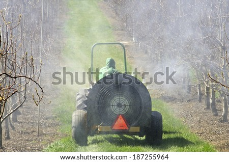 tractor using a air blast sprayer with a chemical  insecticide or fungicide in the orchard of peach trees in Oregon - stock photo