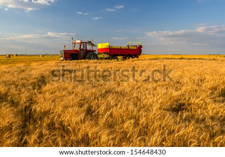 Tractor with trailer passing by wheat field on sunny summer day.