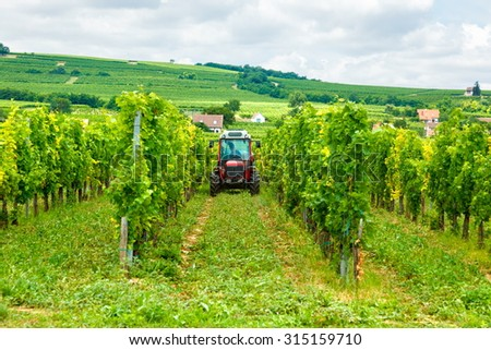 Tractor working in the vineyard, summertime - stock photo