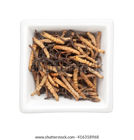 Traditional Chinese Medicine - Ophiocordyceps in a square bowl isolated on white background - stock photo