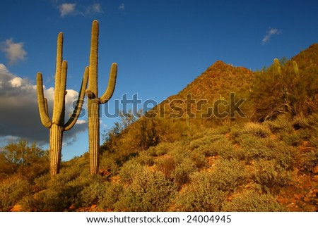 Traditional Desert Saguaro