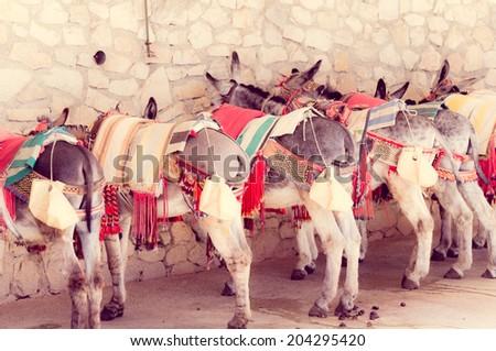 traditional donkey taxi in Nerja, Malaga, SPain - stock photo