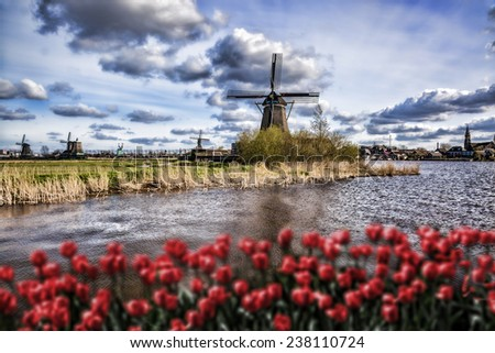 Traditional Dutch windmills with red tulips in  Zaanse Schans, Amsterdam area, Holland - stock photo