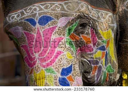 Traditional elephant makeup in  Jaipur, Rajasthan, India. - stock photo
