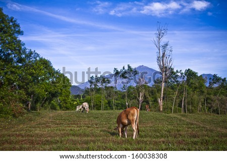 Traditional Farm in Java Indonesia with blue mountain as background - stock photo