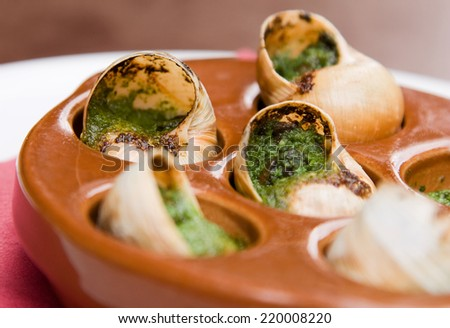traditional french snails.  - stock photo