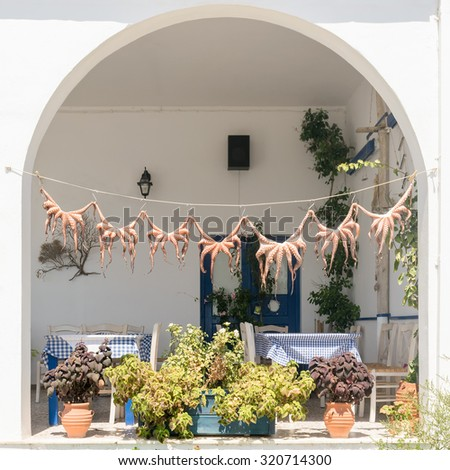 Traditional Greek food octopus drying in the sun. - stock photo