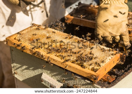 Traditional honey harvesting in a spring morning, Algarve, Portugal, Europe - stock photo