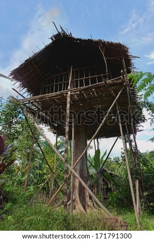 Traditional Koroway house perched in a tree 35 meters above the ground, Western Papuasia, former Irian-jaya, Indonesia - stock photo