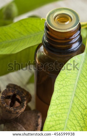 Traditional medicine: Eucalyptus essential oil bottle  with leaves and seeds, close up - stock photo