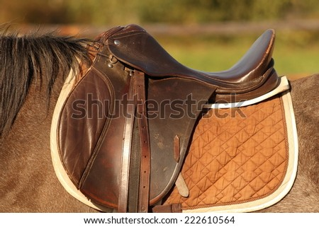 traditional saddle mounted on a  brown mare - stock photo