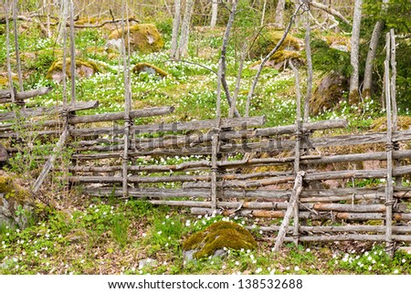 Traditional vintage Swedish wooden fence with Wood Anemone