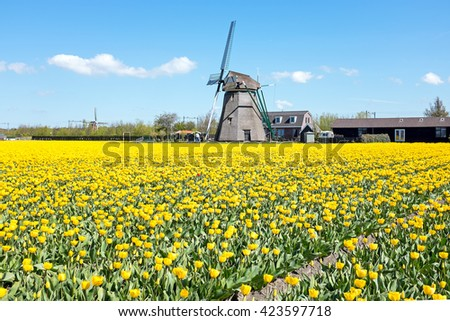 Traditional windmill with blossoming tulips in a dutch landscape in the Netherlands - stock photo