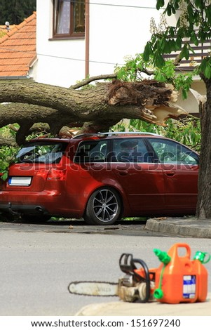 Traffic accident on the car fell a tree - stock photo