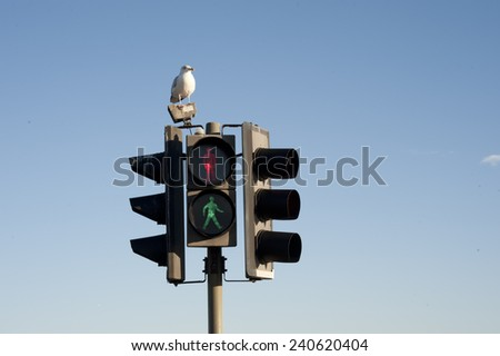 Traffic light in red and green and seagull. Blue sky background. - stock photo