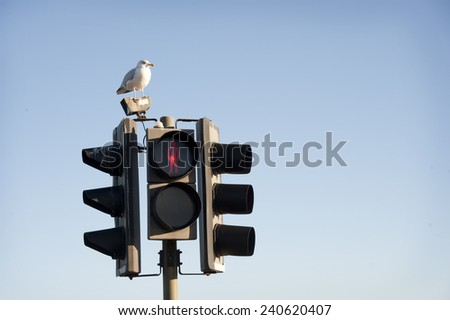Traffic light in red and seagull. Blue sky background.