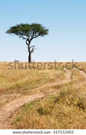 Trail and tree in the beautiful plains of the masai reserve in Kenya Africa