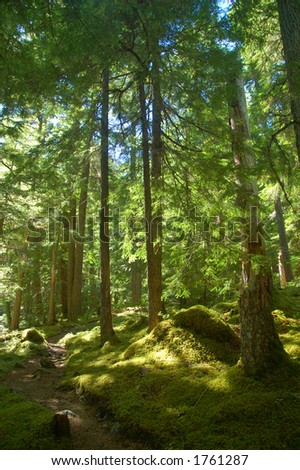 Trail in a forest on the Olympic Peninsula in Washington State