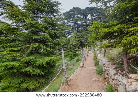 Trail in Cedar forest in Qadisha valley, Lebanon - stock photo