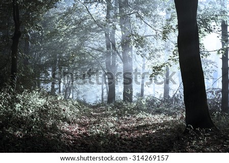 Trail in dark forest. The morning light comes through the trees