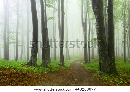 Trail in foggy forest