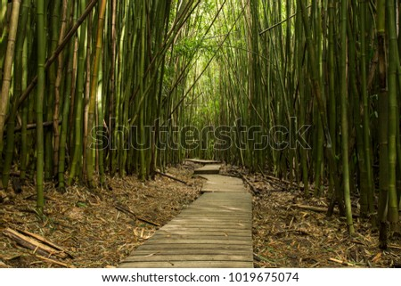 Trail in lush green bamboo forest
