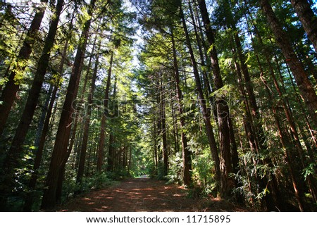 Trail in sequoia giant forest - stock photo