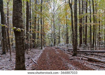 Trail in the autumn woods covered with snow. Nature