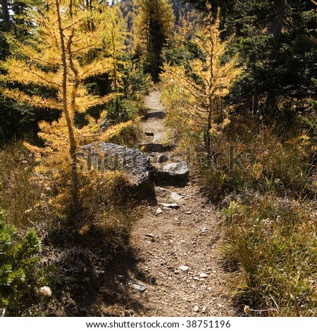 trail in the mountain - stock photo