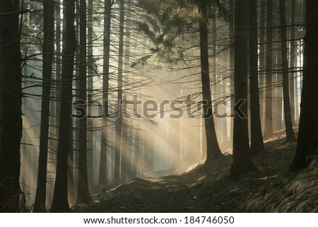 Trail in the mountains on a foggy early spring morning. - stock photo
