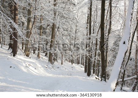 Trail in the mountains through the winter woods. - stock photo