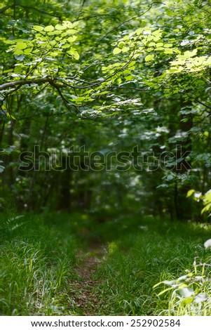 Trail in the vibrant green spring forest in Russia - stock photo
