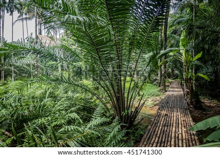 Trail inside tropical forest - stock photo