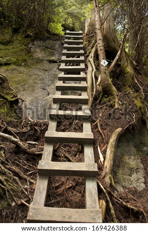 Trail Ladder - Grandfather Mountain area, NC