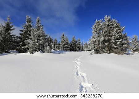 Trail on winter field in forest - stock photo