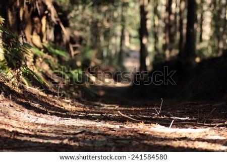 Trail path - stock photo