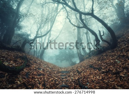 Trail through a mysterious dark old forest in fog. Autumn morning in Crimea. Magical atmosphere. Fairytale - stock photo