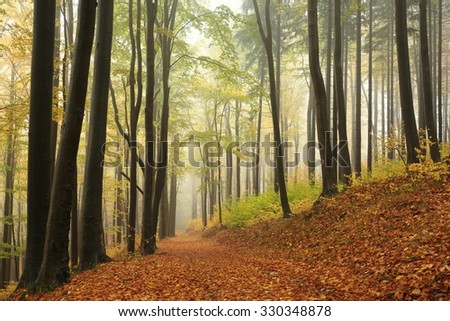 Trail through autumn beech forest in foggy weather. - stock photo