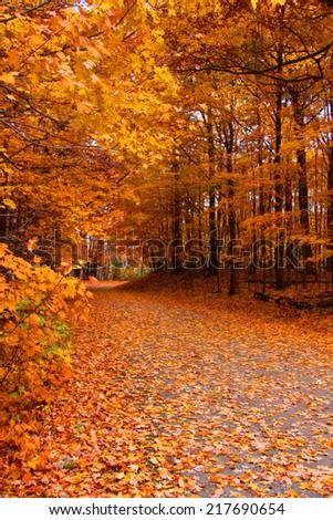 Trail through autumn trees - stock photo