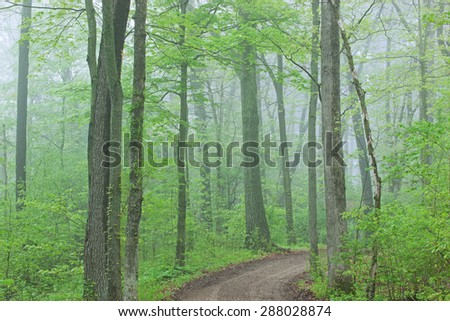 Trail through foggy spring woodland, Kellogg Forest, Michigan, USA - stock photo