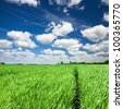 Trail through green field in tall grass - stock photo