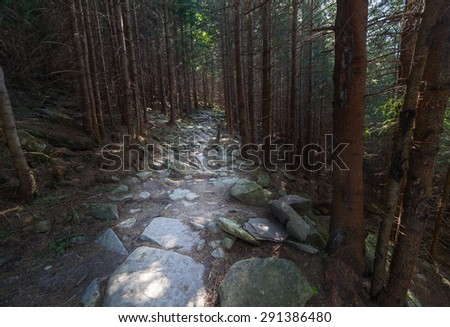 Trail through lush green forest in Ukraine - stock photo