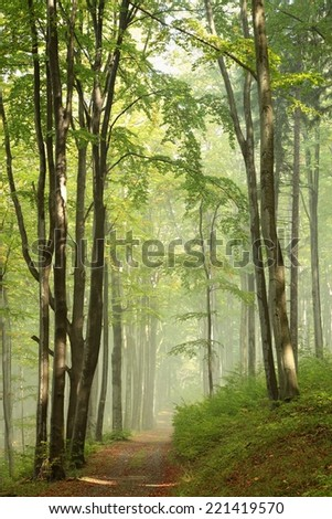 Trail through misty autumn forest in the sunshine. - stock photo