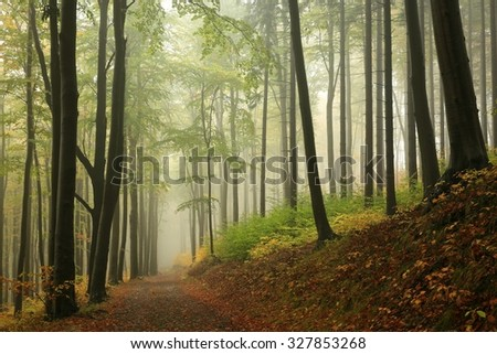 Trail through the autumnal forest surrounded by fog.