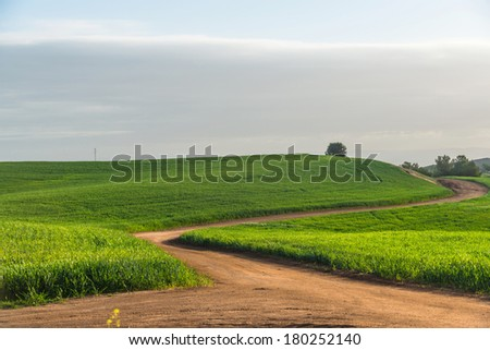 trail through the grassy field in summer day - stock photo