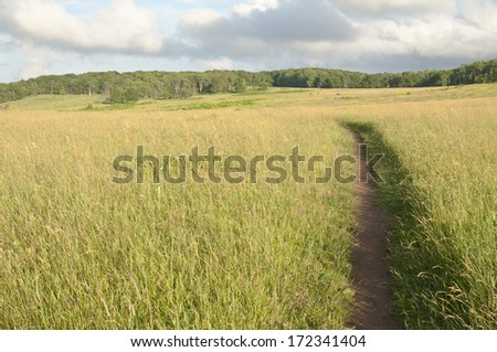 Trail through the meadow - stock photo